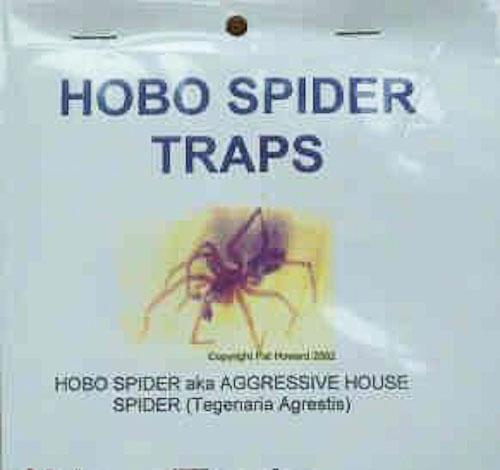 Hobo Spider Traps